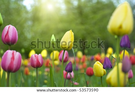 Spring flowers in the garden - stock photo