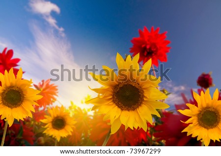 Spring flowers in the garden, a sunny day - stock photo