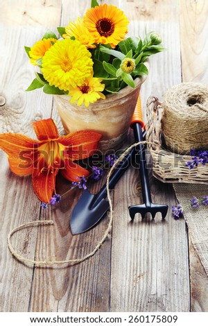 Spring flowers in the pot and garden tools  on an old wooden table - stock photo
