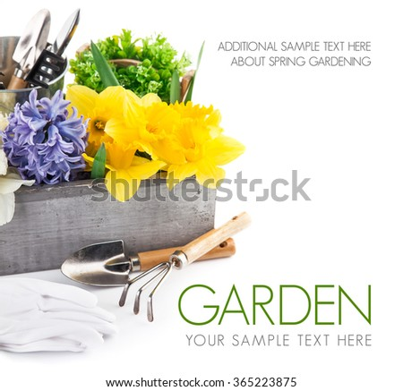 Spring flowers in wooden box with garden tools. Isolated on white background - stock photo
