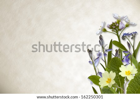 Spring flowers including bluebell and primrose on parchment paper background. - stock photo