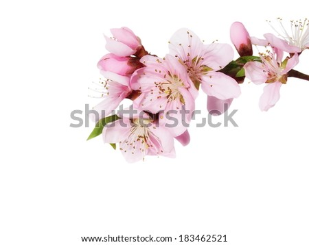 Spring flowers isolated on white,  with clipping path
