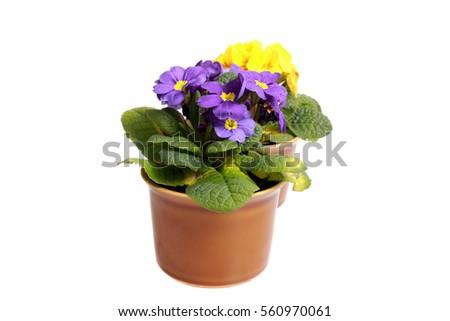 Biblioteca Floral | Flores y regalos de Royer - Flores, Plantas y Regalos con la misma entrega de día para todas las ocasiones.