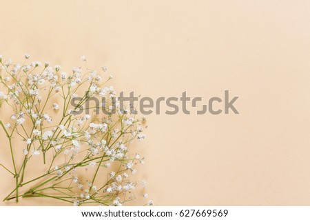 Spring flowers on a beige background, space for text