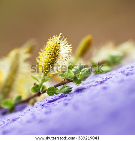 Spring flowers on lilac knitted cloth in the garden. Easter decoration with blossoming willow. Close up image. Soft focus - stock photo