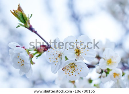 spring flowers on tree - stock photo