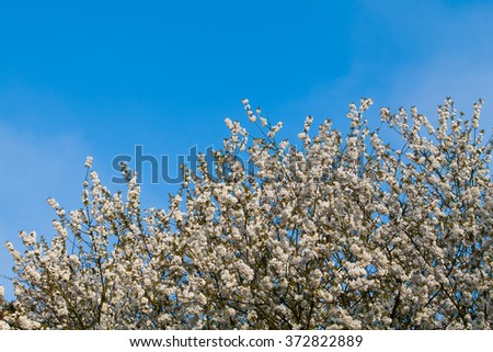 spring flowers on tree branch. Spring blossom background