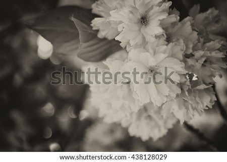 Spring flowers on tree with blurred background, vintage tone - stock photo