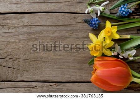 Spring flowers on weathered wood with copyspace - stock photo
