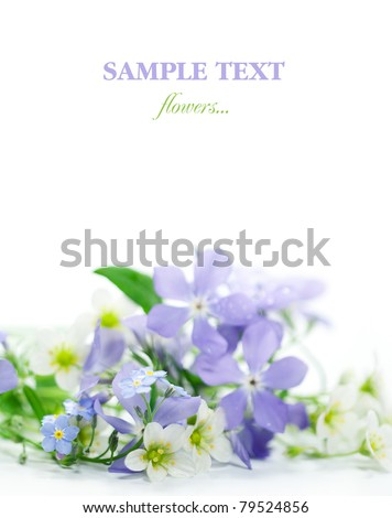 Spring flowers on white background. - stock photo