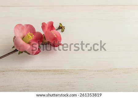 spring flowers on wooden surface - stock photo