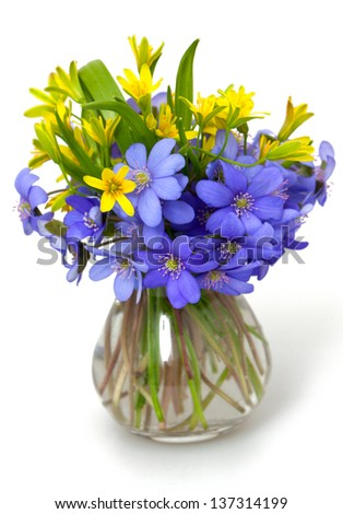 spring  flowers over white - stock photo