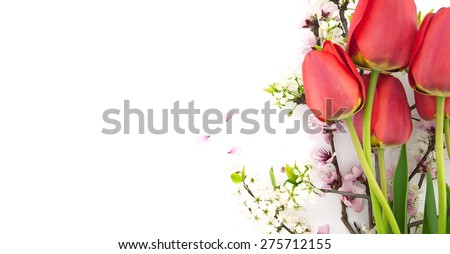 Spring flowers, red tulips and blossoming branches, isolated on white background with space for greeting message. Mother's Day and spring background concept - stock photo