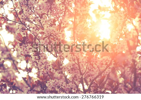 Spring flowers. Shallow depth of field. - stock photo