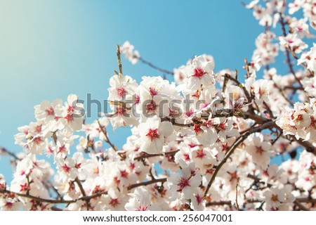 Spring Flowers./ Spring Flowers - stock photo