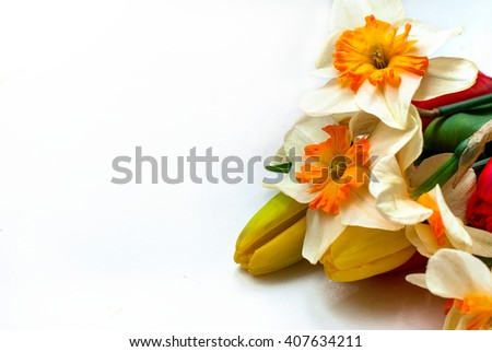 Spring flowers tulips and daffodils on white background