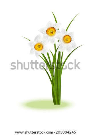 Spring Flowers. White narcissus on white background with space for your text