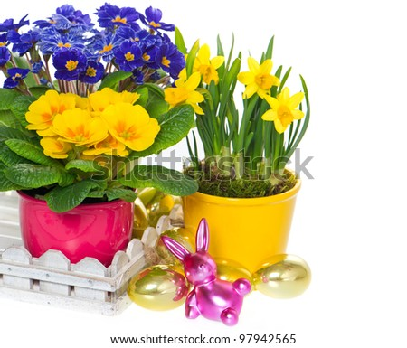spring flowers with easter decoration. primulas and narcissus in pot on white background - stock photo