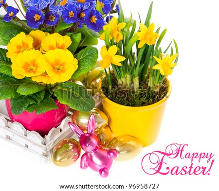 spring flowers with easter decoration. primulas and narcissus in pot on white background. Happy Easter! card concept - stock photo