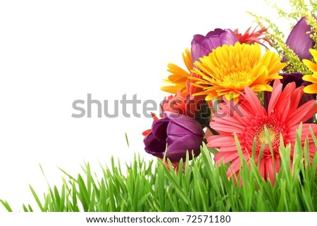 Spring flowers with fresh grass isolated on white background - stock photo