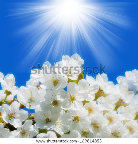 spring flowers with sun rays - stock photo