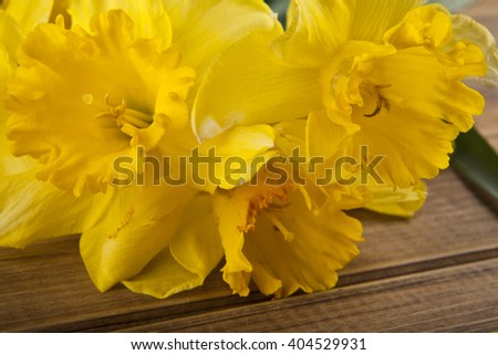 spring flowers yellow Narcissus on wooden background closeup - stock photo