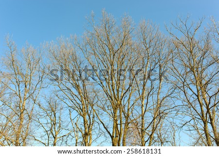 Spring forest and blue sky - stock photo