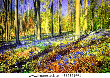 Spring forest covered with bluebells and anemones flowers - stock photo