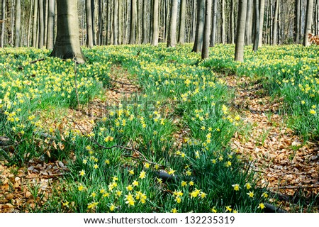 Spring forest covered with daffodils - stock photo