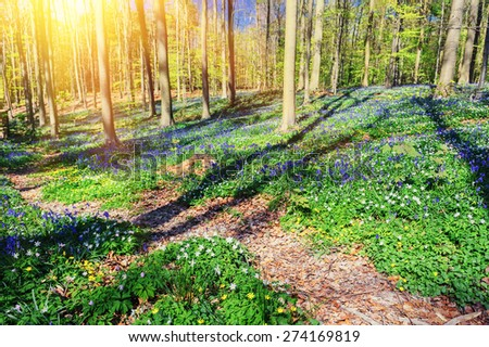 Spring forest path covered by bluebells - stock photo