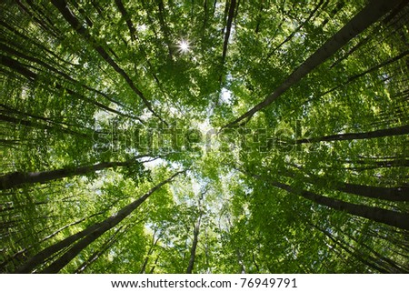 spring forest treetops (intentionally distorted image; shot with a fisheye lens) - stock photo