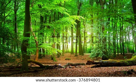 Spring forest Veluwe, the Netherlands - stock photo