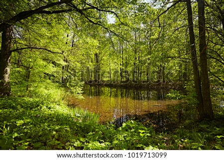 Spring fresh forest, with juicy paints. Wild dirty pond with dirty water in the springtime. Bright May foliage.