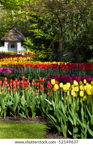 Spring garden with colorful tulips in yellow and red - stock photo