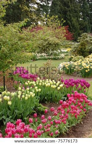 Spring garden with tulips - stock photo