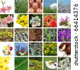 Spring gardening blooms collage - stock photo