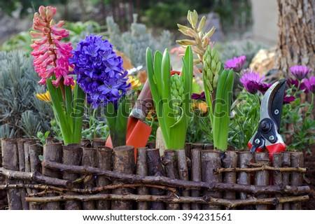 Spring Gardening. Garden Flowers And Tools.
