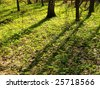 Spring glade in forest shined with the sun - stock photo
