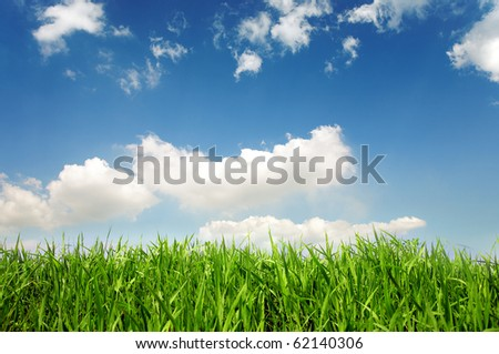 Spring grass - stock photo