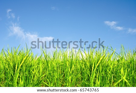 Spring grass and blue sky - stock photo