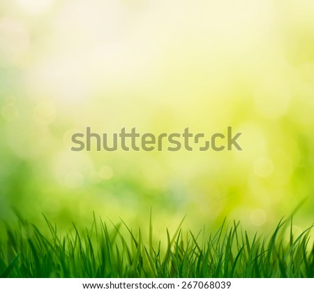 Spring grass. Blur background. Summer nature. Bokeh blurred background. - stock photo