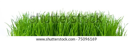 spring grass isolated on white - stock photo
