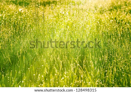 Spring grass lit by the morning sun - stock photo