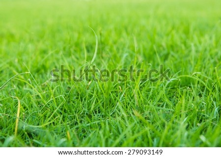 spring green abstract  blurred background