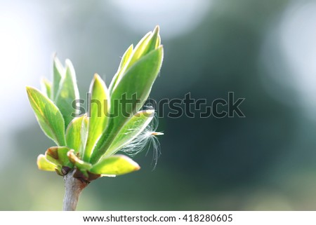 Spring green branch close up - stock photo