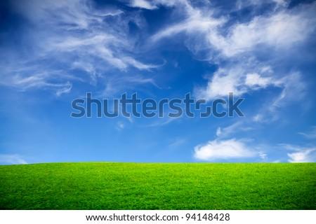 Spring, green field - stock photo