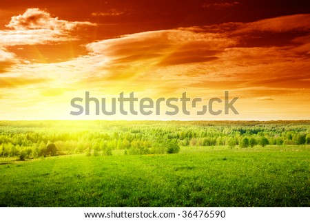 spring green field of grass and sunset