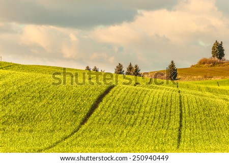 Spring green field with lines, blue cloudy sky in the background - stock photo