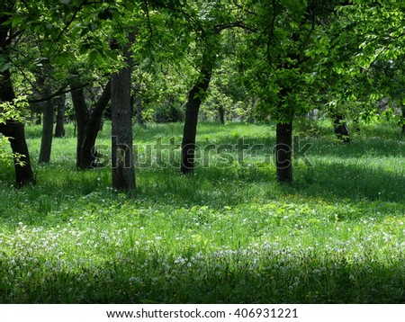 Spring Green Forest. Nature Beautiful Landscape. Park with Green Grass and Trees. Tranquil Background - stock photo