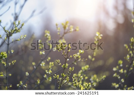Spring green forest with lush foliage  - stock photo